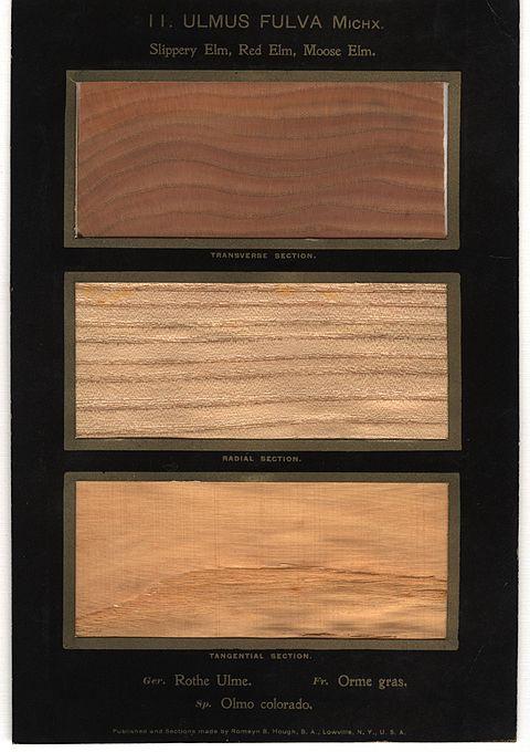 revera wood india