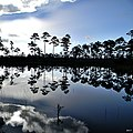 Morning at Flatwoods Pond (7751904850).jpg