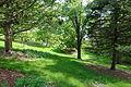 Mount Airy Arboretum - DSC03806.JPG