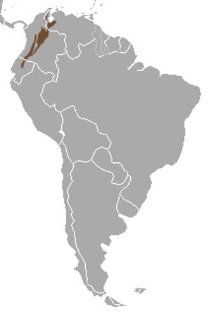 Nasuella - Image: Mountain Coati area