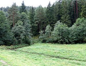Mislinja (settlement) - Movže 1 Mass Grave