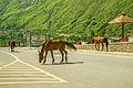 Muzafarabad, Azad Jammu & Kashmir, Pakistan.jpg