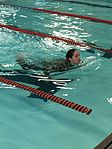 "NY Air National Guardsmen ""dive"" into German badge competition 160616-Z-KF910-012.jpg"
