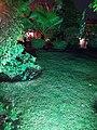 Nature in night.jpg