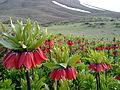 Nature of Buin va Miandasht County.jpg