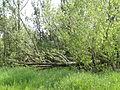 Naturschutzgebiet Heuckenlock 21.05.2014 Phase 60.JPG
