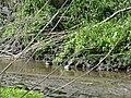 Naturschutzgebiet Heuckenlock 21.05.2014 Phase 84.JPG