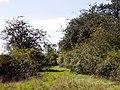 Naturschutzgebiet Mittelberg bei Weil der Stadt - panoramio.jpg