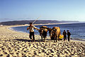 Nazaré-Halage des barques de pêche-1967 08 30.jpg