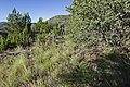 Near Carbonate Creek - Flickr - aspidoscelis.jpg
