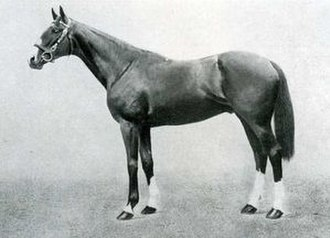 Neil Gow - Image: Neil Gow (horse)