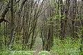 Nekhvoroshcha Volodymyr-Volynskyi Volynska-Nekhvoroshschi nature reserve-view of the central part-3.jpg