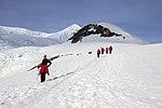 Neko Harbour Antarctica 6 (32395012917).jpg