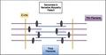 Nemaline myopathy sarcomere.pdf