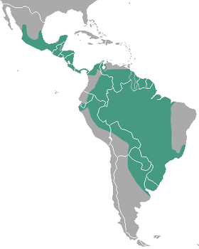 Neotropical Otter area.png