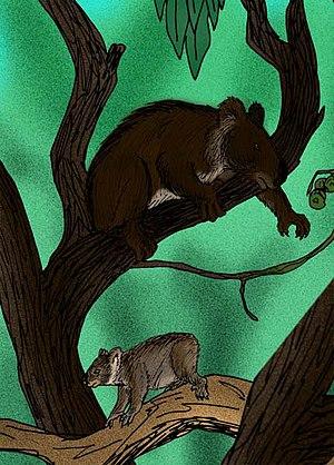Koala - Reconstructions of the ancient koalas Nimiokoala (larger), and Litokoala (smaller), from the Miocene Riversleigh Fauna