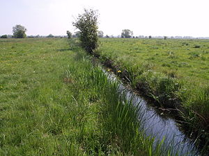 North Petherton - A drain on North Moor