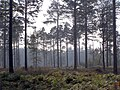 Northern edge of Frame Heath Inclosure, New Forest - geograph.org.uk - 260856.jpg