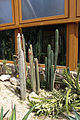 Nyíregyháza Zoo, succulents-3.jpg