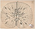 Nyt-Cajal DRAWING m1673-resized-for-web.jpg