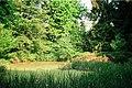 Obersalbach (Heusweiler), pond in the nature park Kallenborn.jpg