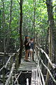 Obo-ob mangrove garden.jpg