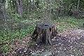 Ohiopyle State Park River Trail - panoramio (143).jpg