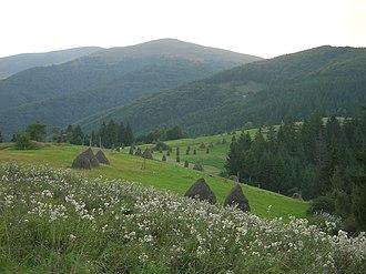 Meadow - Image: Okolí Huklivého 001