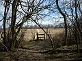 Old Down Wood 15.JPG