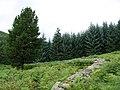 Old Sheep Fold, Glentress Forest - geograph.org.uk - 233242.jpg