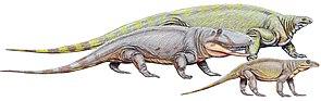 Cotylorhynchus (Hintergrund), Ophiacodon und Varanops.