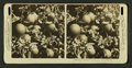 Oranges as they grow, fruit and blossoms, Manatee, Fla., U.S.A, from Robert N. Dennis collection of stereoscopic views.png