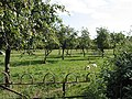 Orchard off Bulley Lane - geograph.org.uk - 536667.jpg