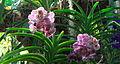 Orchidées c.jpg