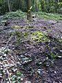 Overzicht van vindplaats van vloeislakken op open plek in het Orderbos, afval van Vroeg Middeldeleeuwse ijzerproductie,--Archeoregio 2, AMK terrein 33B-003 - Apeldoorn - 20422263 - RCE.jpg