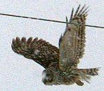 Owltakeoff - West Virginia - ForestWander.jpg