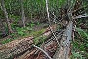 Přírodní rezervace Skalské rašeliniště (08).jpg