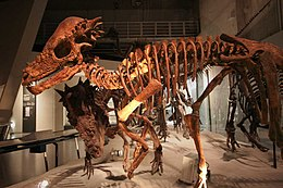 Skeleton mounts based on the «Sandy» specimen