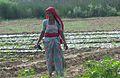 Pagesa de l'Índia.JPG