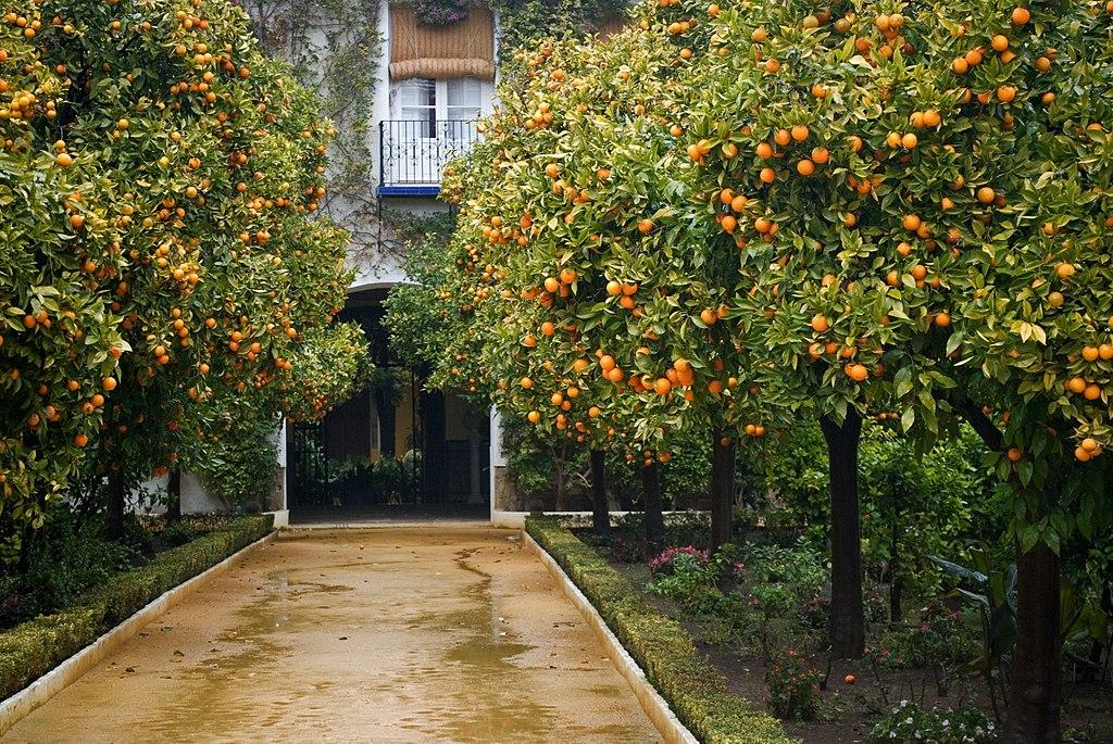 Allées d'oranger du Palacio de las Duenas de Séville - Photo d'Anual