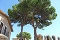 Palloncino Villa di Isola Polvese - panoramio.jpg