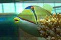 Palma Aquarium- Pez picasso.jpg