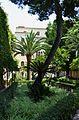 Palmera i pi del jardí de la casa Benlliure de València.JPG