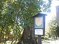 Památný strom-javor u Domu dětí a mládeže.JPG