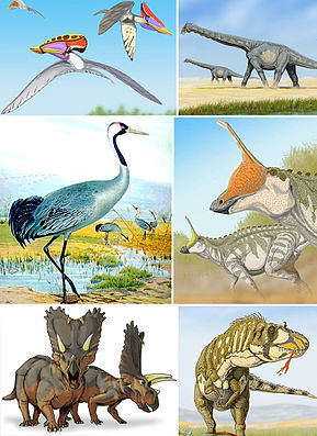 Verschiedene Angehörige der Ornithodira, im Uhrzeigersinn von links oben: Tupuxuara, Alamosaurus, Tsintaosaurus, Daspletosaurus, Pentaceratops, Kranich (Grus grus).