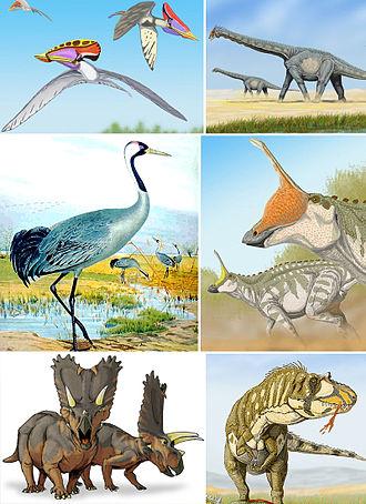 Avemetatarsalia - Clockwise from top-left:  Tupuxuara leonardi (a pterosaur),  Alamosaurus sanjuanensis, (a sauropod),  Tsintaosaurus spinorhinus (an ornithopod),  Daspletosaurus torosus (a tyrannosaur),  Pentaceratops sternbergii (a ceratopsian),  and Grus grus (an extant avian).