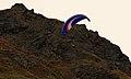 Paragliding near Hatchers Pass (2940952862).jpg