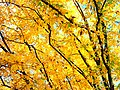 Park views in autumn (Netherlands 2011) (6311928868).jpg