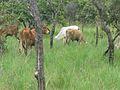 Parque nacional Aguaro-Guariquito 048.jpg