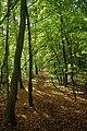 Path Through Franks Wood - geograph.org.uk - 2115871.jpg